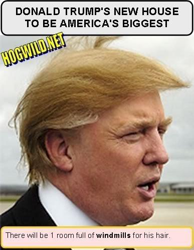 donald trump hair. donald trump hair