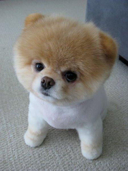Puppy Cute: Puppy Rescue