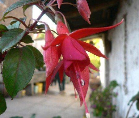 rose flower garden wallpaper. Rose Flower Garden Wallpaper