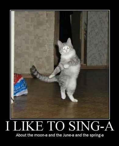 Funny Pictures With Captions Black Background. very funny cats with captions.