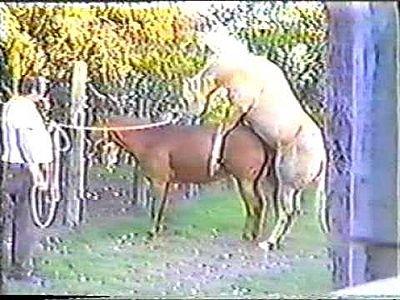 Cartoon Horses Mating. Horses+mating+donkey