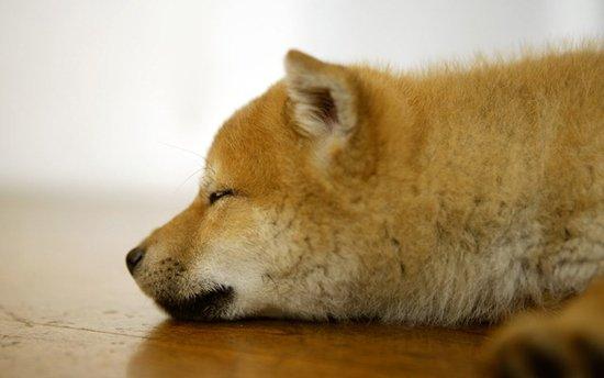 cute golden retriever puppies wallpaper. house cute puppies wallpaper