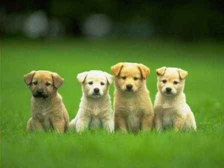 cute puppies and dogs. Cute Puppies Desktop Dogs