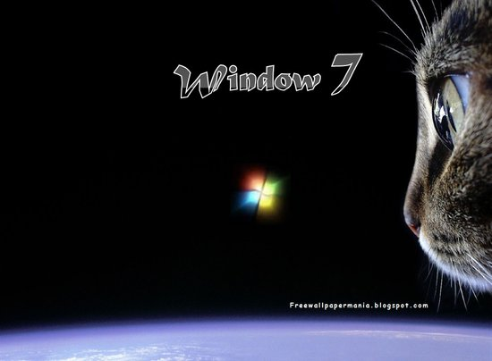 wallpaper 2011 desktop free download. •Cats desktop wallpaper