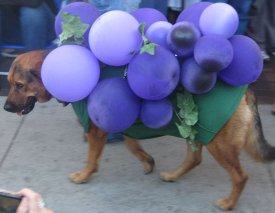 Easy homemade dog halloween costumes images amp pictures becuo
