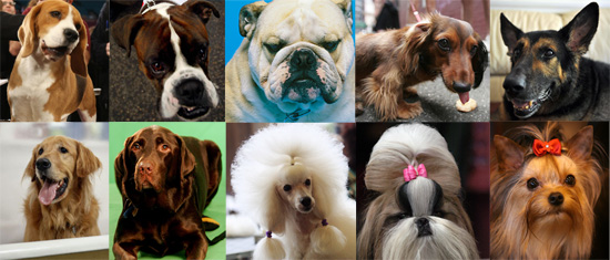 Dog Breeds Alphabetical Dog Breed For 2009