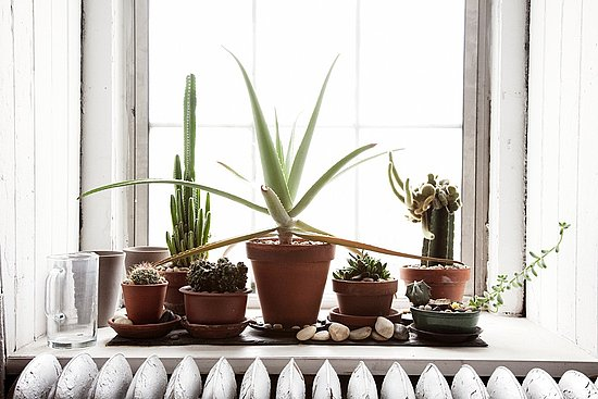 Do you keep potted plants on your windowsill popsugar home - Houseplants thrive low light youre window sill ...